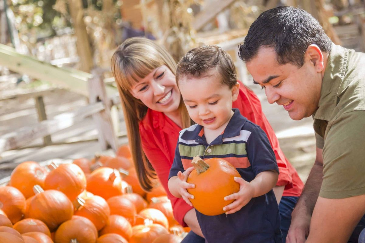 Happy Family Picking Pumpkins at the Pumpkin Patch.