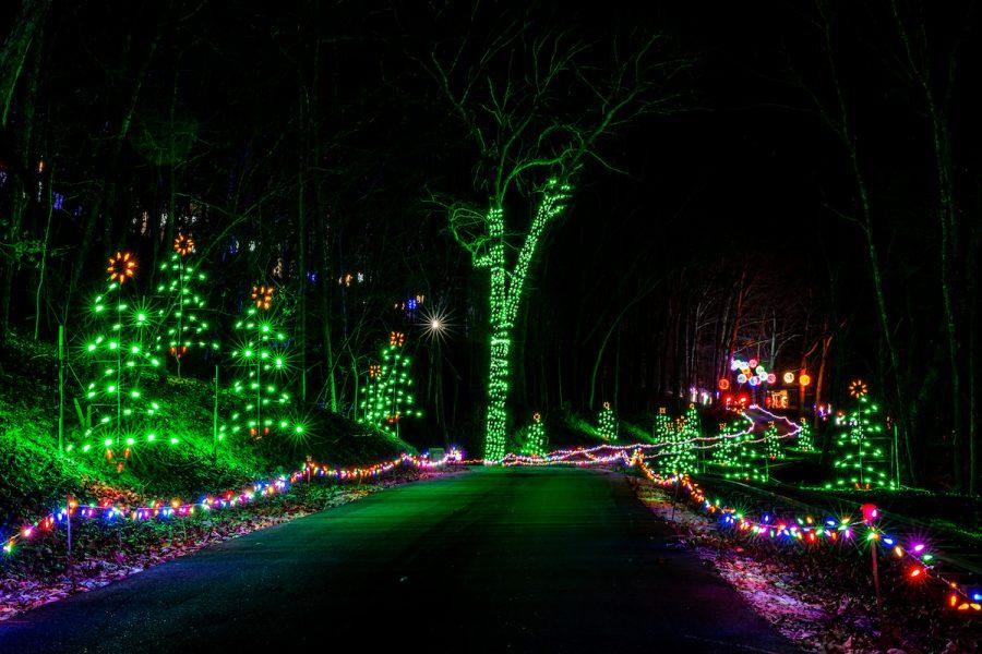 trailoflights-trees 2